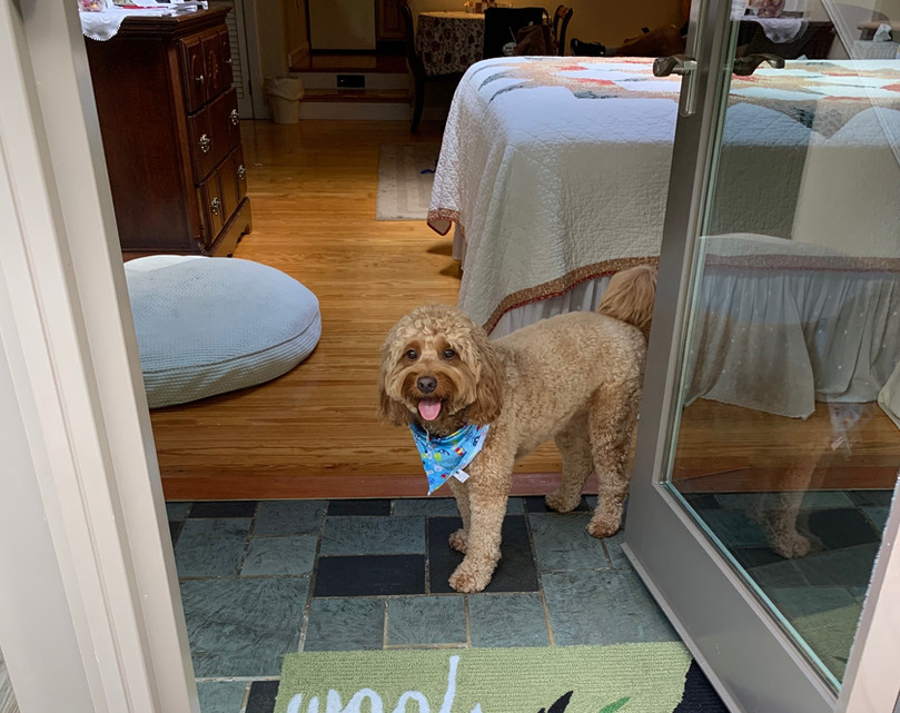 Dunkin is ready to go outside at Shaker Mill Inn