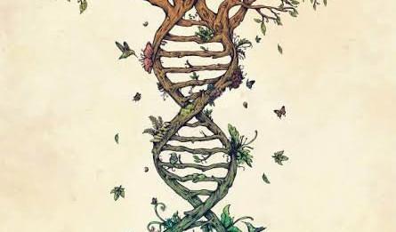 A libertação dos antepassados para evolução da vida no presente