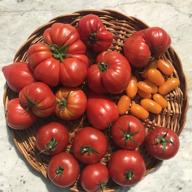 Oxheart tomatoes.jpg