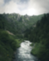 forest-photography-2189700.jpeg