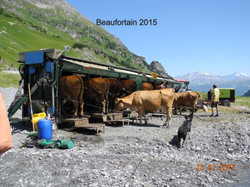2014 Beaufortain, traite mobile en estiv