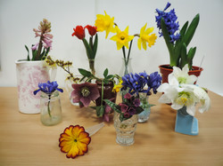 Flower of the Month Entries