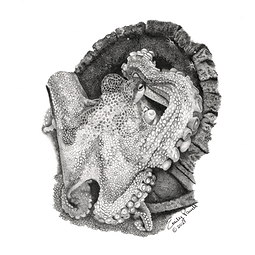 detailed fine art pencil drawing octopus