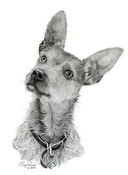 detailed fine art dog portrait