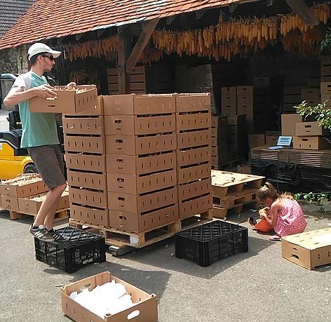 Preparazione delle confezioni di bulbi d