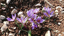 fleur terre 6.jpg