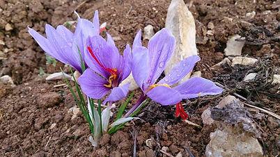 fleur terre.jpg