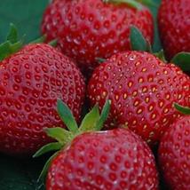fraise polka.png