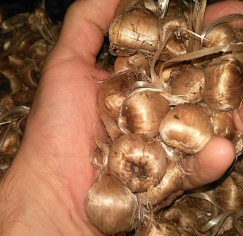 Bulbi di zafferano