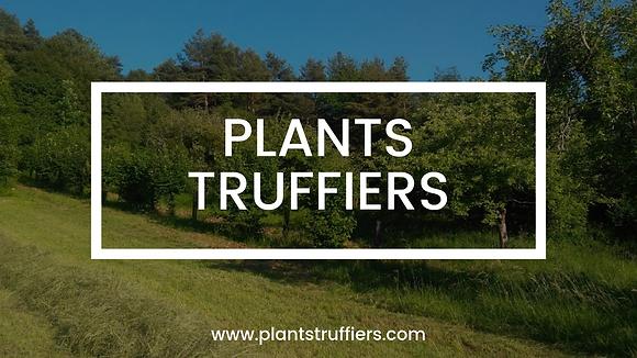 Noisetier Commun truffier - MELANOSPORUM