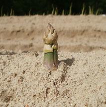 asparagus-839466_960_720.jpg