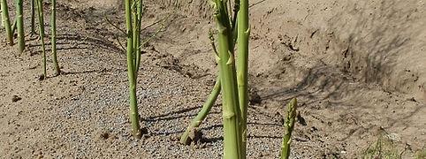 asparagus-837664_960_720.jpg