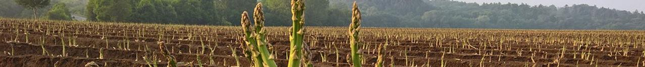 asparagus-2374182_960_720.jpg
