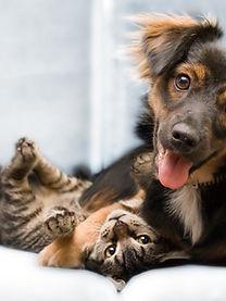 Dog-Cat-Friends.jpg