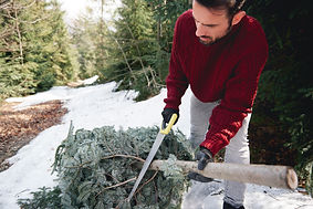 man_cutting_christmas_tree.jpg