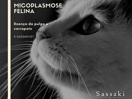 Micoplasmose Felina