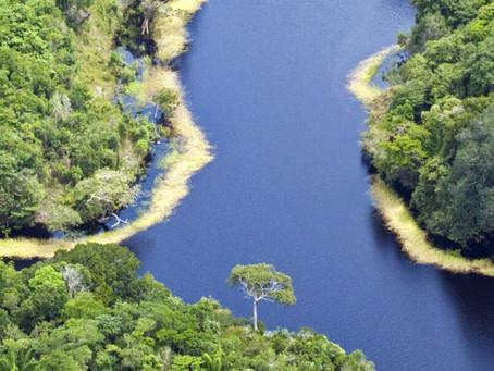 Immersion sonore : plongez au coeur de l'Amazonie