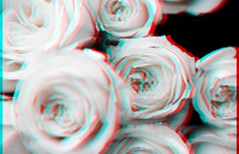 3D-Rose
