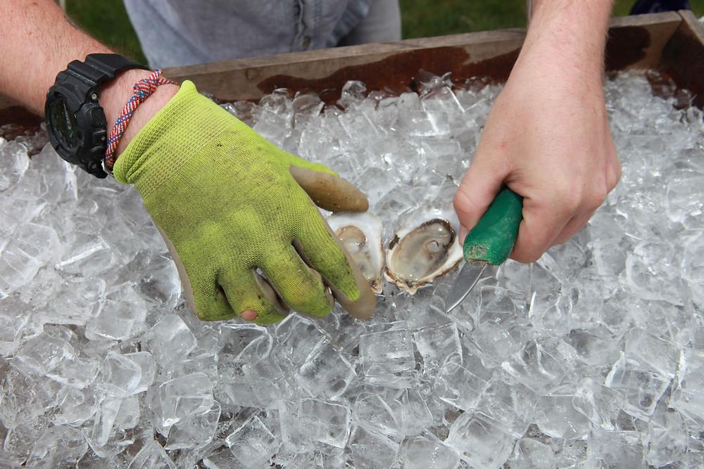oyster, Colorado Wedding Planner, shucker, shuck, party, shucking, rehearsal dinner