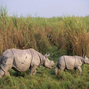Part 2: Behavioural Ecology of Indian Rhino