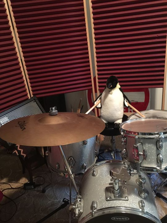 Fred my session drummer