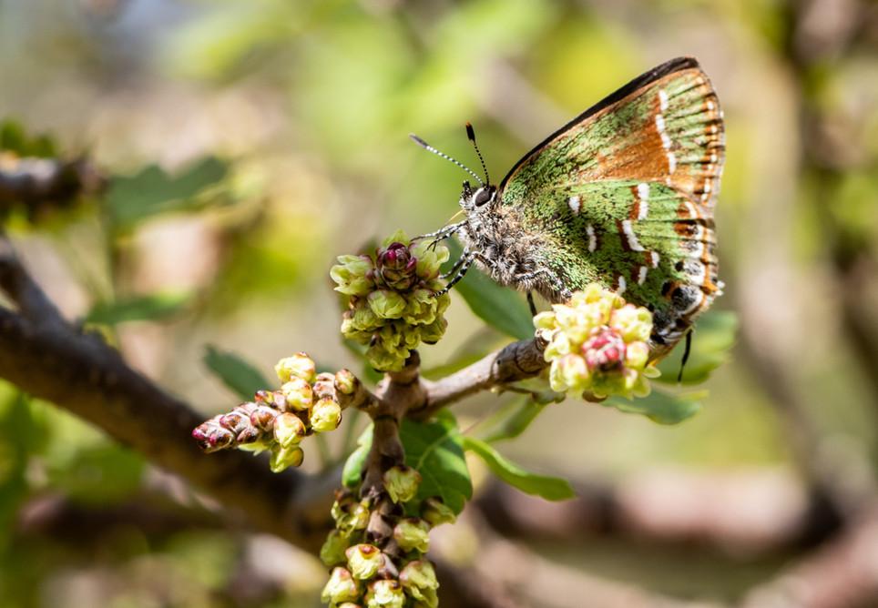 Butterfly 21032019-04.jpg