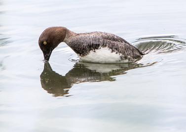 Duck 05072014-05.jpg
