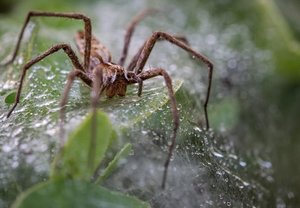 Spider 25072017-10.jpg