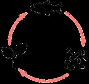 aquaponics-cycle-01.png