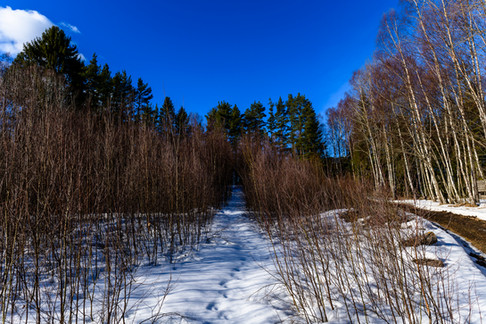 The Winter Forest