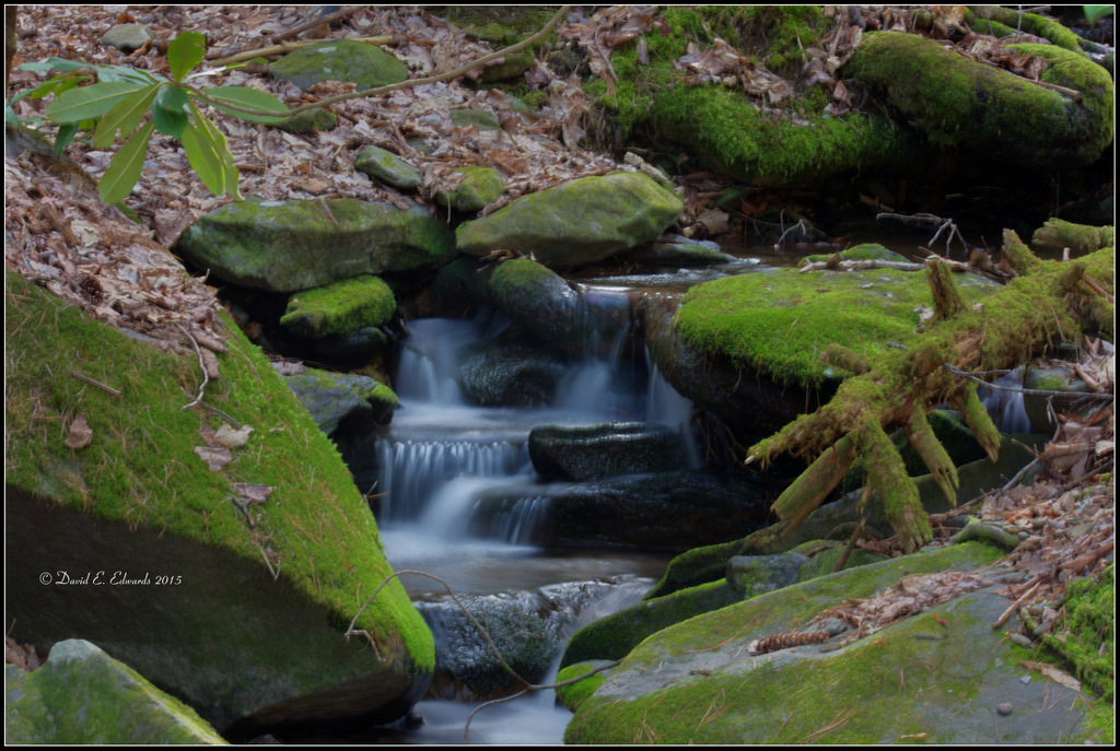 Creek in Elkmont area of Smoky Mts.