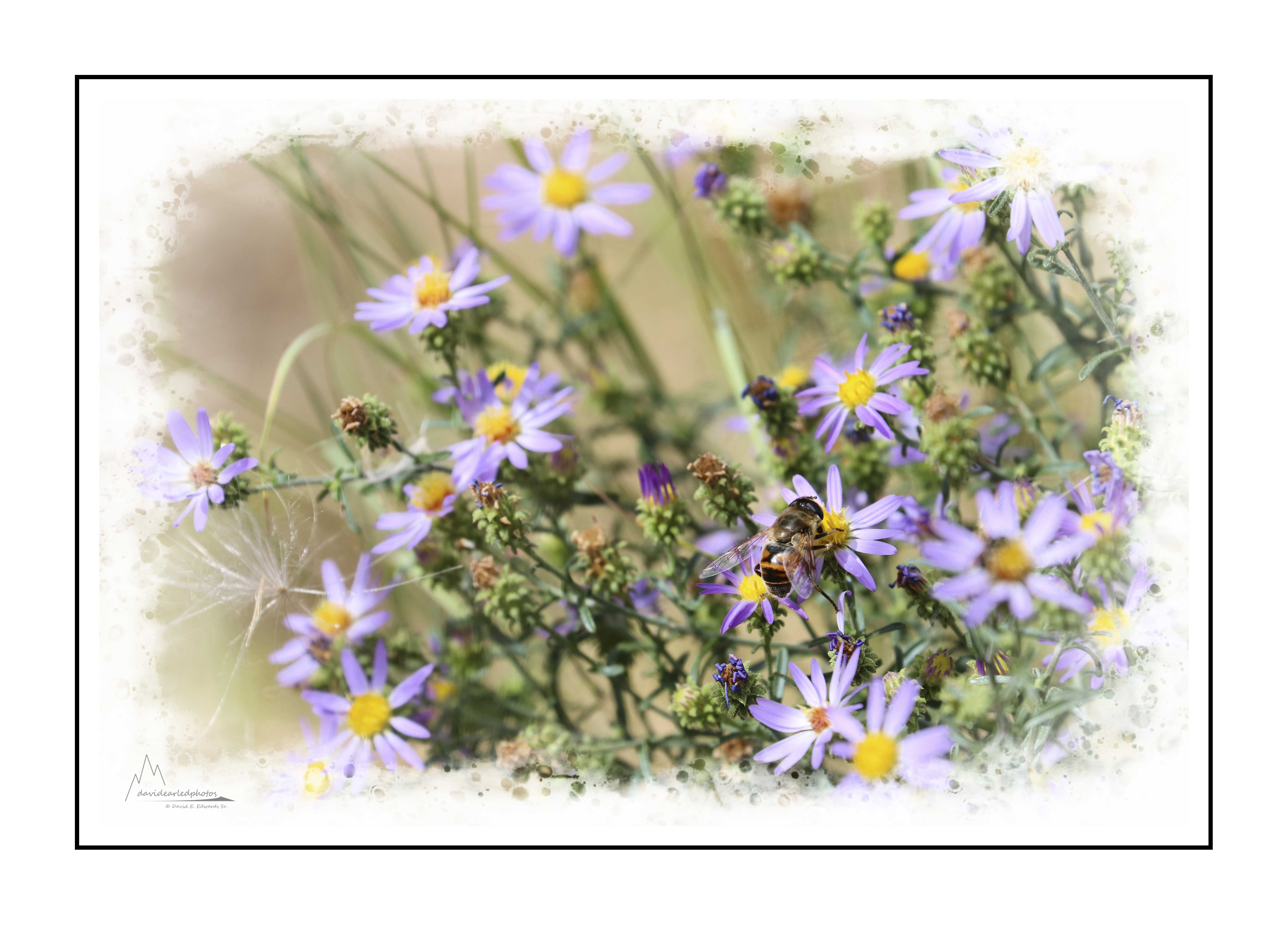 Wildflowers and bee in Yellowstone