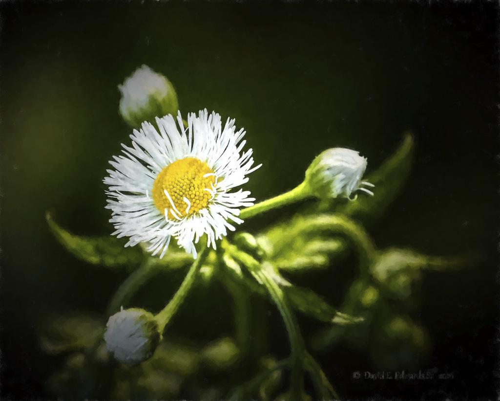 Mountain Wildflower Chiaro I
