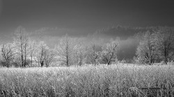 Cades Cove frost foggy morning 2