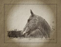 Cades Cove Horse Antique