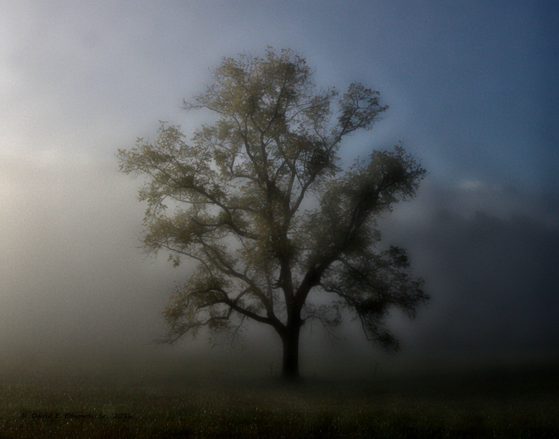 Cades Cove Tree (photo art)