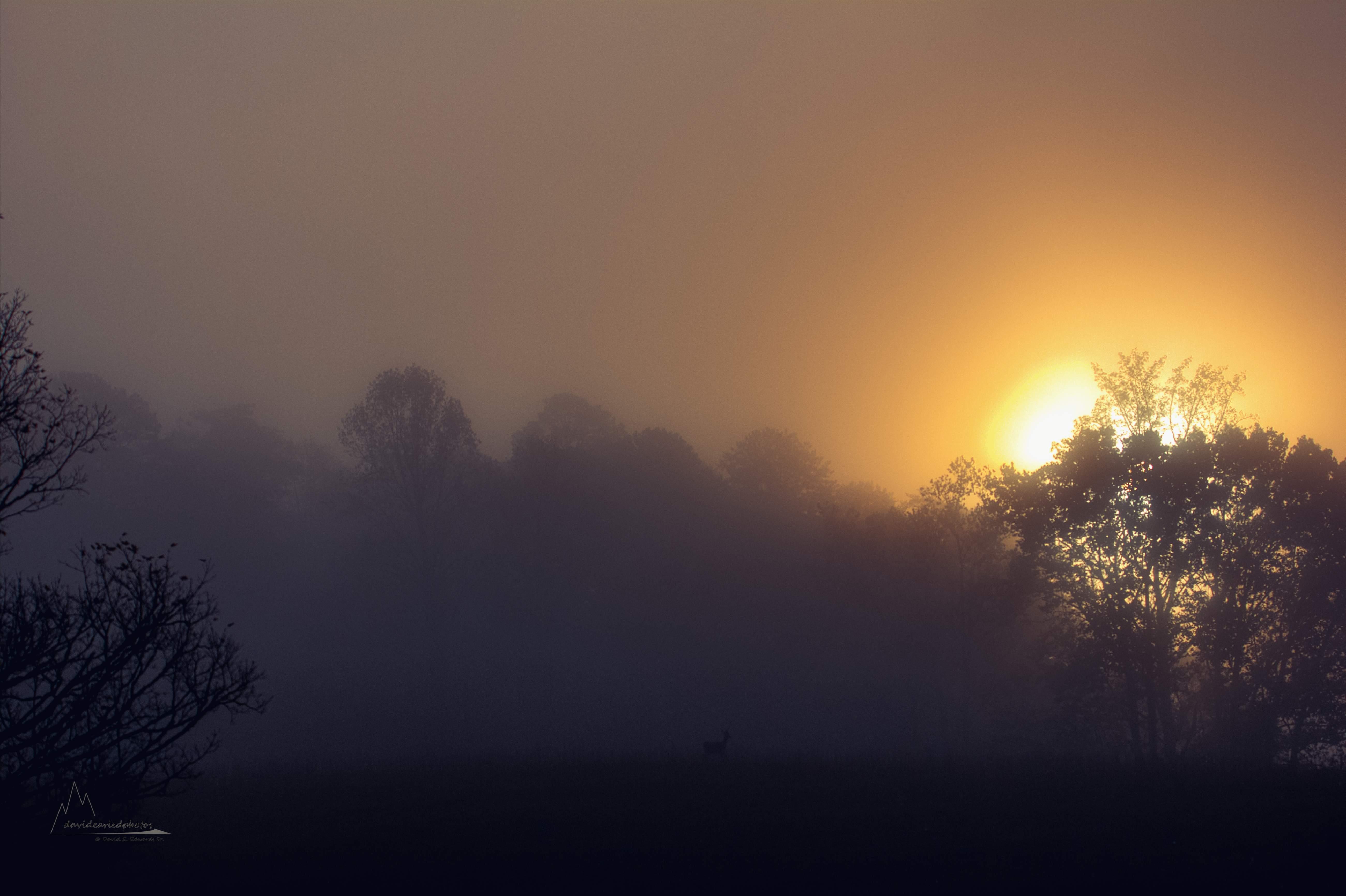 A very foggy Cades Cove morning