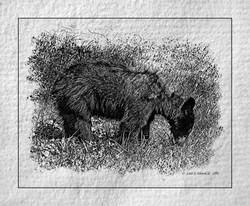 Cades Cove bear paper napkin print
