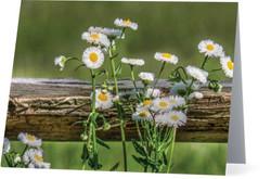 WILDFLOWERS AND RAIL