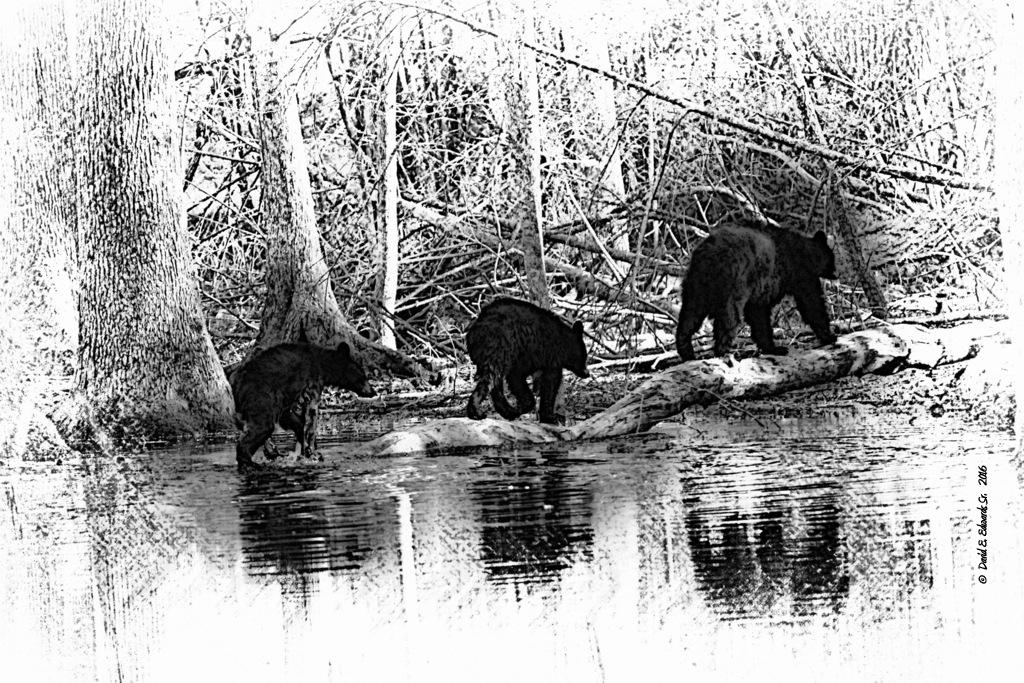 3 Bears Cades Cove B&W Sketch