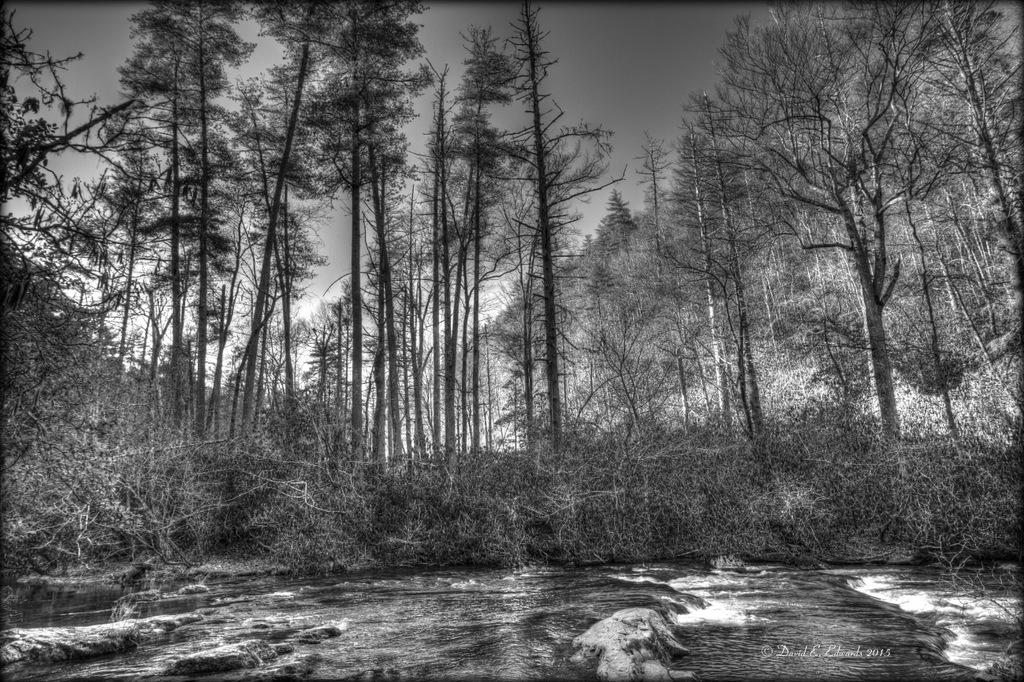 Creek along trail to Abrams Falls