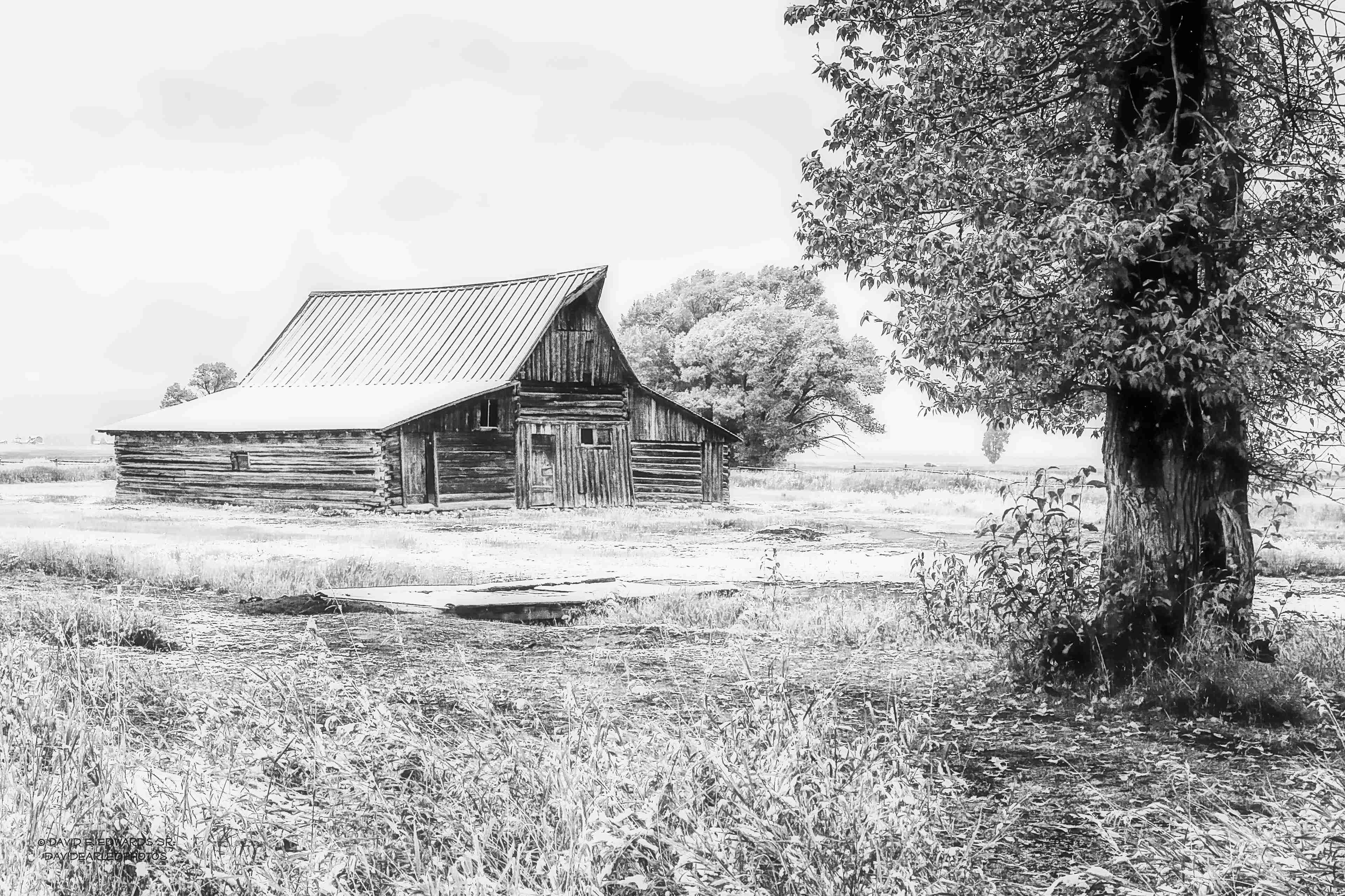 TA Moulton Barn and Tree a black and white 20