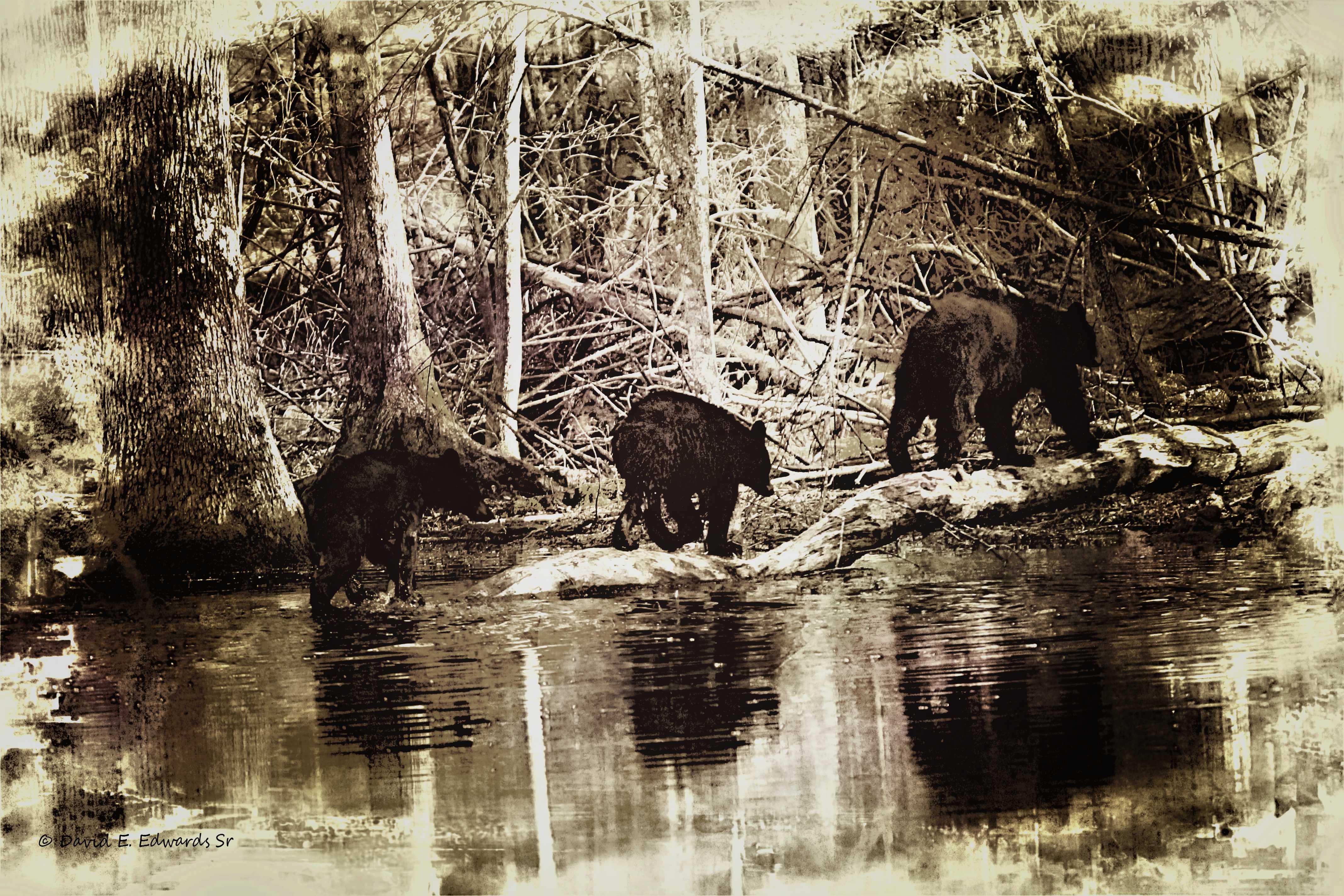 3 Bears old style photo edit