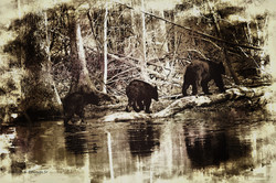 3 Bears old style photo edit