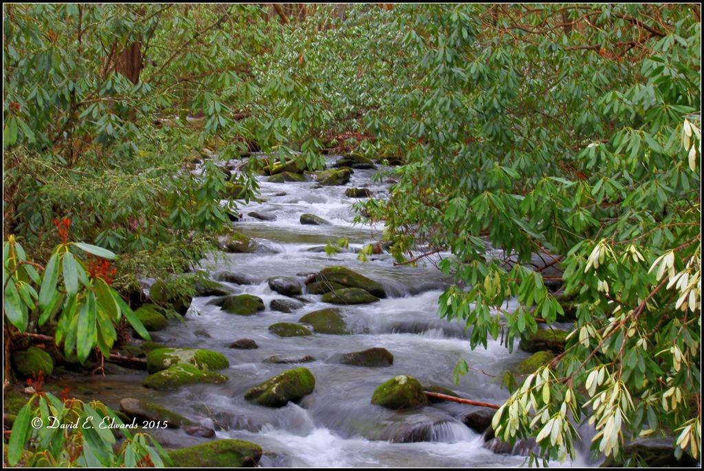 Elkmont creek 2