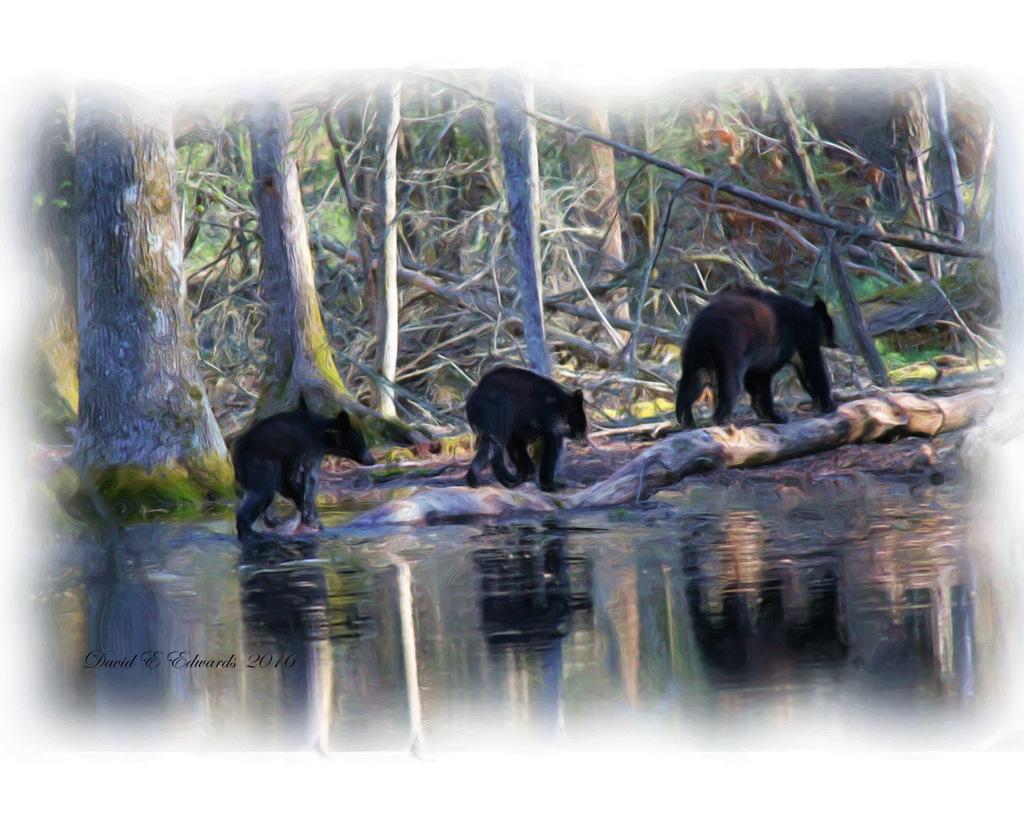 3 bears Oil with white edge