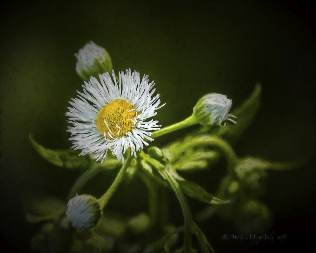 Mountain Wildflower chiaro II