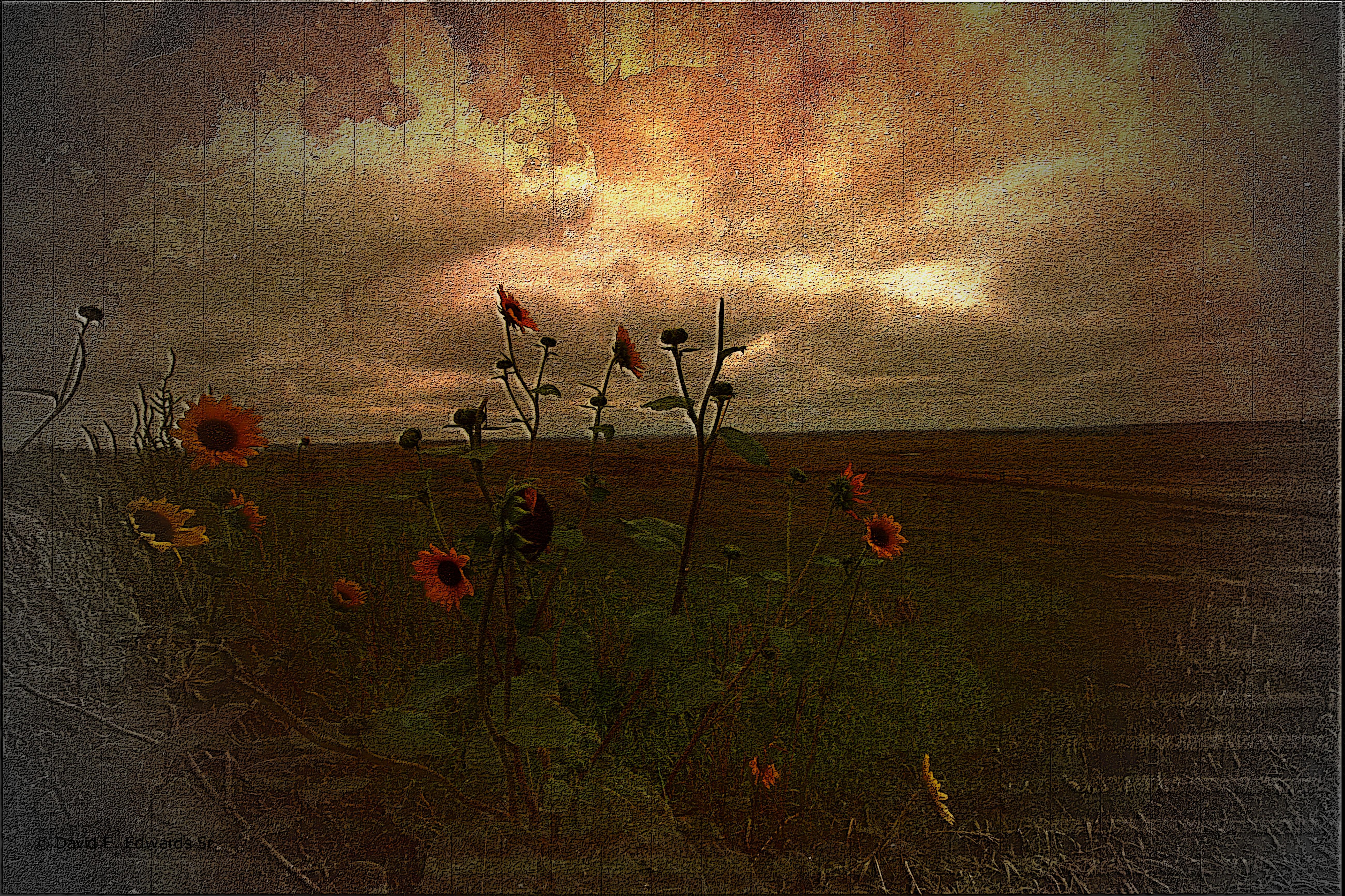 Prairie flowers along the way...