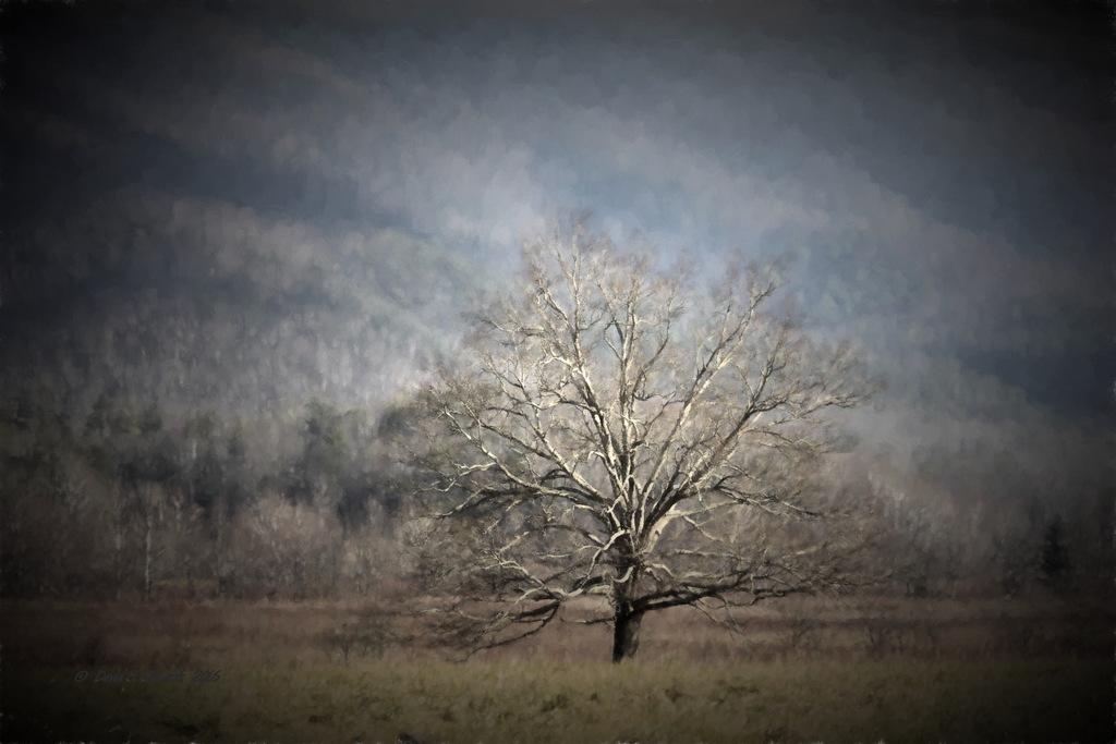 Cades Cove Tree 1