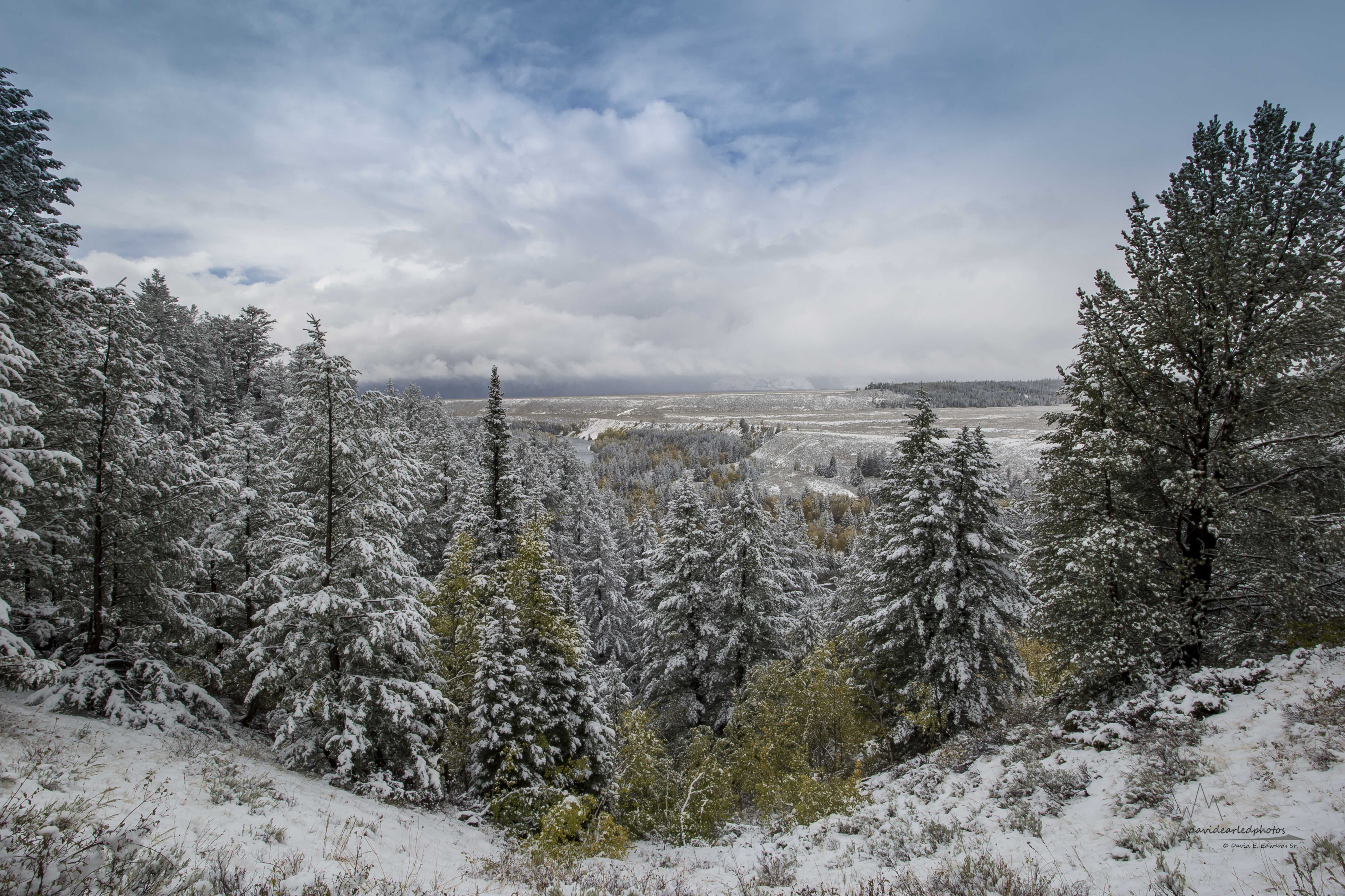 Snowy view in Yellowstone